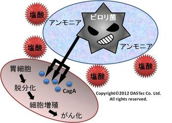 ピロリ菌がん化.jpg