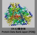 ER-E2