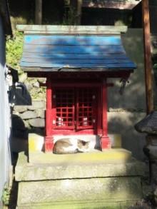 尾山神社の猫2.jpg