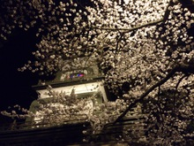 20130405尾山神社の桜.jpg