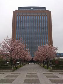 20130417県庁イチヨウ.jpgのサムネイル画像