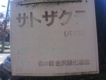 20130510サトザクラ看板.jpg