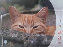 2013090604カレンダーのネコ.jpg
