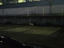 2013092703猫通過中夜.jpg