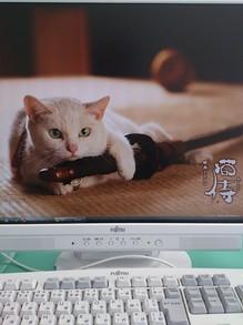 2014031404PC画面が猫侍.jpg