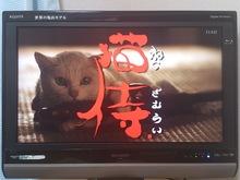 2014031405ドラマ猫侍.jpg