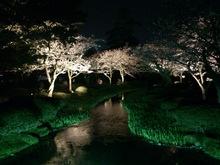 2014041108花見橋?.jpg