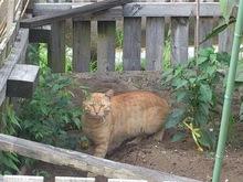 2014071110猫カメラ目線.jpg