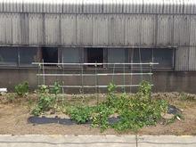 2014082201菜園.jpg