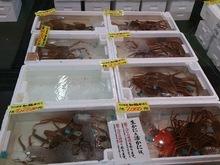 2014122115箱にカニ.jpg