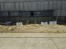 2015052202菜園2.JPG