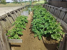 2015052205菜園3.JPG