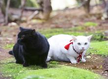 2015073103黒猫ジャック.jpg