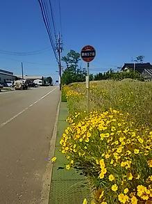 2016061002バス停と花.JPG