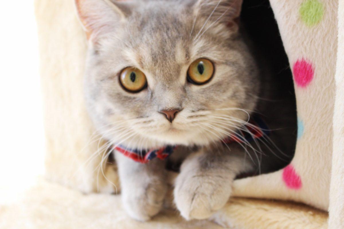 19歳、腎臓病の愛猫ちゃんが自分から食べにくるものとは?