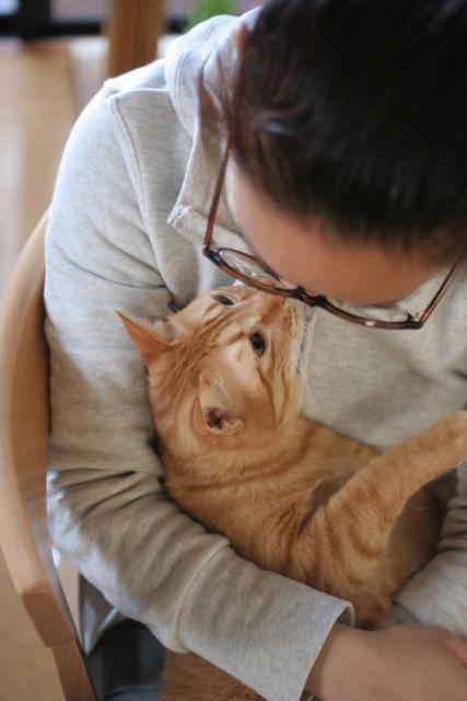 腎臓の働きを改善する遺伝子「AIM」でネコの寿命が2倍に!?